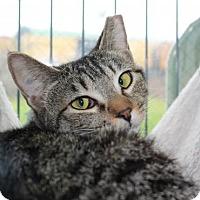 Adopt A Pet :: Vicki - Erwin, TN