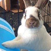 Adopt A Pet :: Sonic - San Antonio, TX