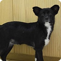Adopt A Pet :: Dolly - Boca Raton, FL