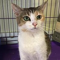 Adopt A Pet :: Seraphina - Winston-Salem, NC
