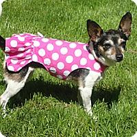 Adopt A Pet :: Cindy - Osseo, MN