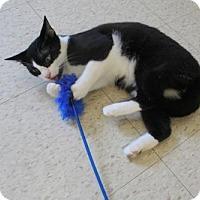Adopt A Pet :: Wednesday - Mocksville, NC