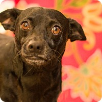Adopt A Pet :: PACO - Inland Empire, CA