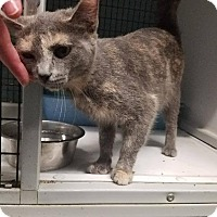 Adopt A Pet :: Ella - Shelbyville, TN