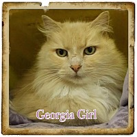 Adopt A Pet :: Georgia Girl - Harrisburg, NC