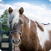 Adopt A Pet :: Ranger - Nicholasville, KY