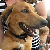 Adopt A Pet :: Max - Murrells Inlet, SC
