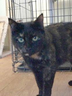 Adopt A Pet :: Turbo  - Devon, PA