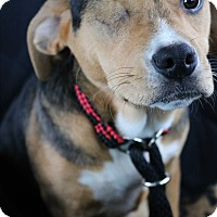 Adopt A Pet :: Jane - Warrenville, IL