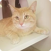 Adopt A Pet :: Tanner - Warren, MI