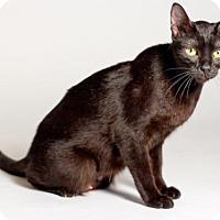 Adopt A Pet :: Skye - Kingston, ON