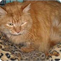 Adopt A Pet :: Morris - Riverside, RI