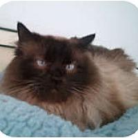 Adopt A Pet :: Geisha - Anchorage, AK