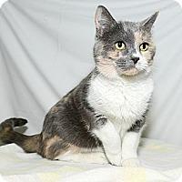 Adopt A Pet :: Marsha - New York, NY