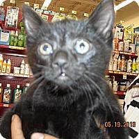 Adopt A Pet :: Aubrie - Riverside, RI
