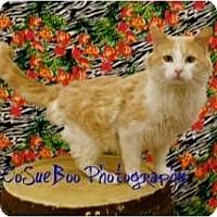 Adopt A Pet :: Campbell - Warren, MI