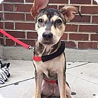 Adopt A Pet :: Gem - New York, NY
