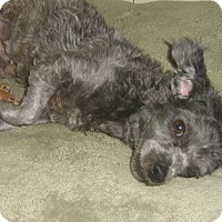 Adopt A Pet :: Amelia-WATCH MY VIDEO!!! - Irvine, CA