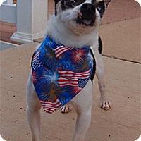 Adopt A Pet :: Bandit - Spring City, TN
