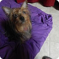 Adopt A Pet :: LuLu - West Deptford, NJ