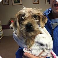 Adopt A Pet :: Ferbie (3 yr 15 lb) - Kermit, WV