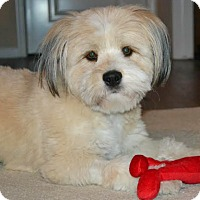 Adopt A Pet :: Jiggs-ADOPTION PENDING - Boulder, CO