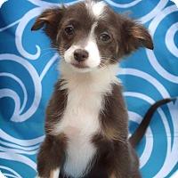 Adopt A Pet :: Magdalena - Barnesville, GA