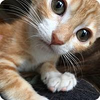 Adopt A Pet :: CarmelB - North Highlands, CA