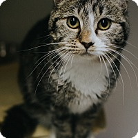 Adopt A Pet :: Lucky - Indianapolis, IN
