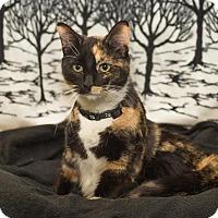 Adopt A Pet :: Joelle - South Haven, MI
