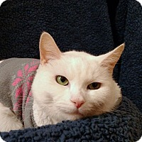 Adopt A Pet :: Jasmine - Tega Cay, SC