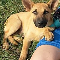 Adopt A Pet :: Coral - East Hartford, CT
