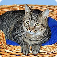 Adopt A Pet :: J.J. - Gatineau, QC