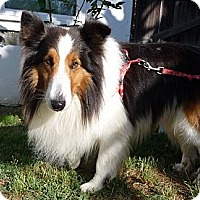 Adopt A Pet :: Colonel - San Diego, CA