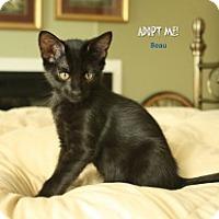 Adopt A Pet :: Beau - Justin, TX