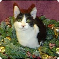 Adopt A Pet :: Motley - Modesto, CA