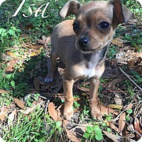 Adopt A Pet :: Isa - Gainesville, FL