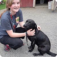 Adopt A Pet :: Starla - Charleston, AR