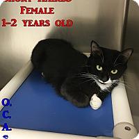 Adopt A Pet :: Petco#1 - Triadelphia, WV