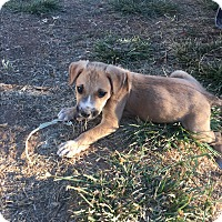 Adopt A Pet :: Marco - grants pass, OR