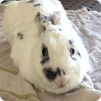 Adopt A Pet :: Flik - Los Angeles, CA