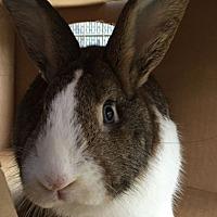 Adopt A Pet :: MERLIN - San Clemente, CA