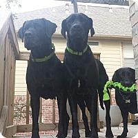 Adopt A Pet :: Gracie - Austin, TX