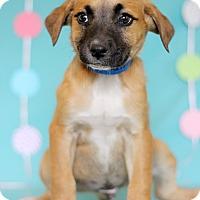 Adopt A Pet :: Green - Waldorf, MD
