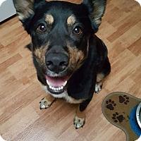 Adopt A Pet :: Marissa - Tomah, WI