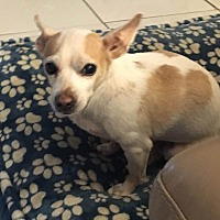 Adopt A Pet :: Clarence - Port Charlotte, FL