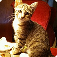 Adopt A Pet :: Mittens - Yorba Linda, CA