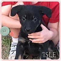 Adopt A Pet :: Isle - DeForest, WI