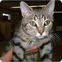 Adopt A Pet :: Tony - Warren, OH