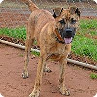 Adopt A Pet :: Tiger - Athens, GA
